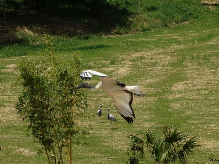 """nouveau spectacle d'oiseaux 2014 """"les maîtres des airs"""", le 06 Juin 2014 suite 11"""
