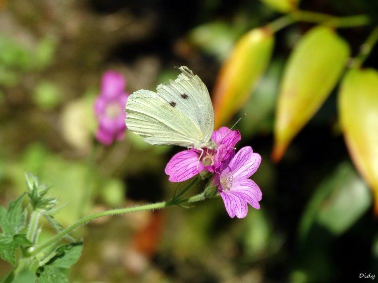 La flore des allées de Beauval - Printemps été 2014 suite 9