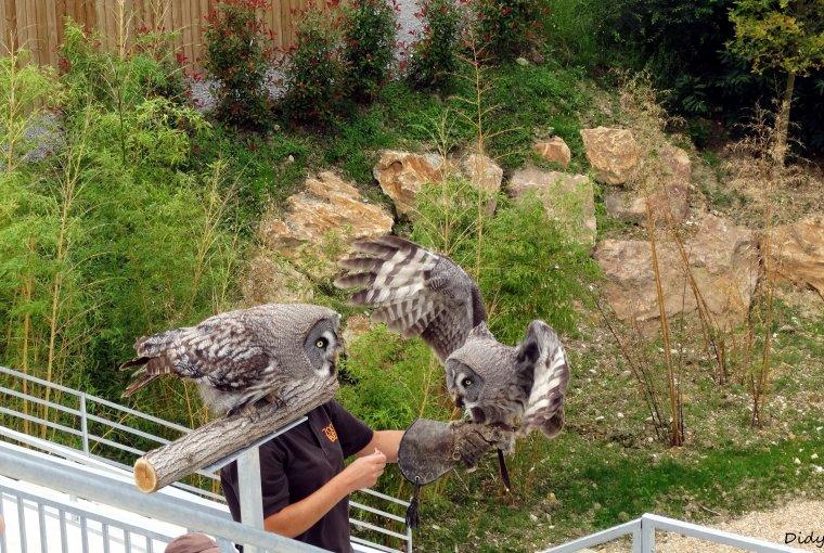"""nouveau spectacle d'oiseaux 2014 """"les maîtres des airs"""", le 26 Juin 2014"""