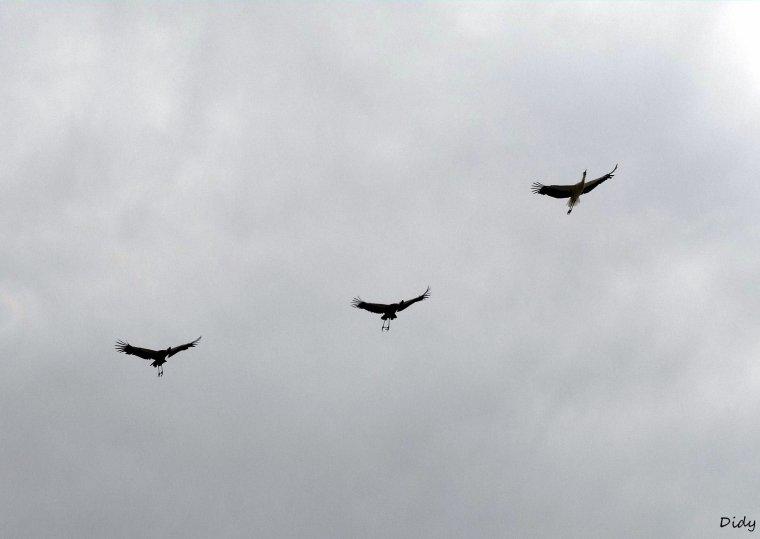 """nouveau spectacle d'oiseaux 2014 """"les maîtres des airs"""", le 26 Juin 2014 suite 8"""