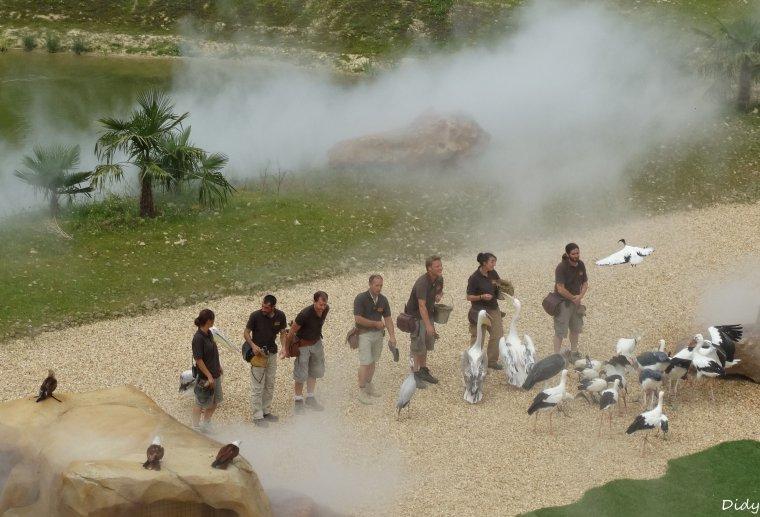 """nouveau spectacle d'oiseaux 2014 """"les maîtres des airs"""", le 26 Juin 2014 suite 10"""