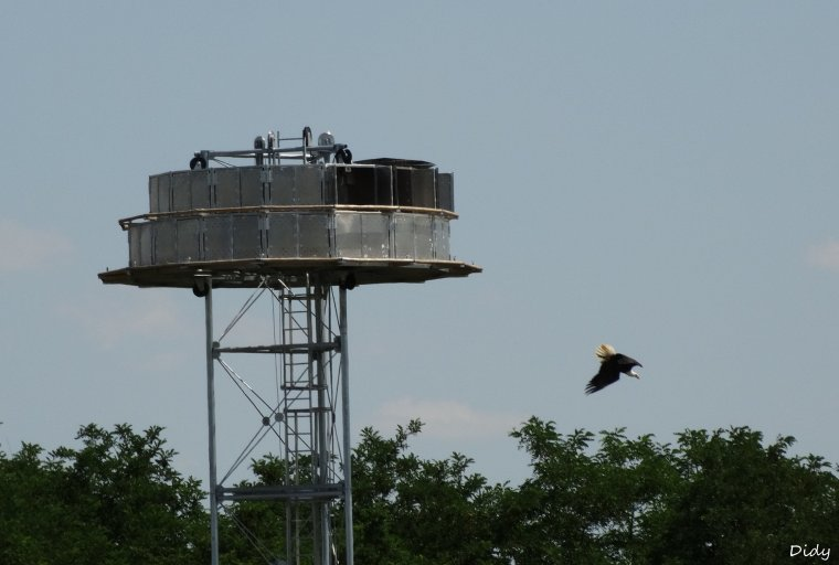"""nouveau spectacle d'oiseaux 2014 """"les maîtres des airs"""", le 03 Juillet vu de l'exterieur du zoo"""