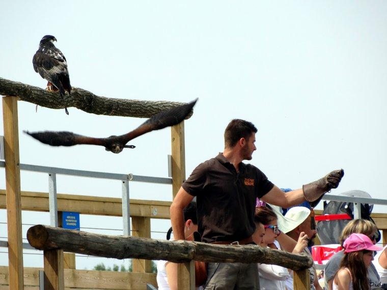 """nouveau spectacle d'oiseaux 2014 """"les maîtres des airs"""",le 19 Juillet 2014 suite 2"""
