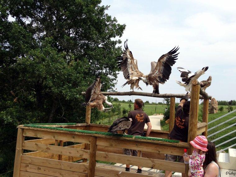 """nouveau spectacle d'oiseaux 2014 """"les maîtres des airs"""",le 19 Juillet 2014 suite 7"""