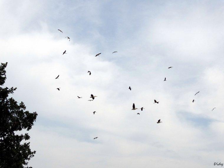 """nouveau spectacle d'oiseaux 2014 """"les maîtres des airs"""",le 19 Juillet 2014 suite 10"""