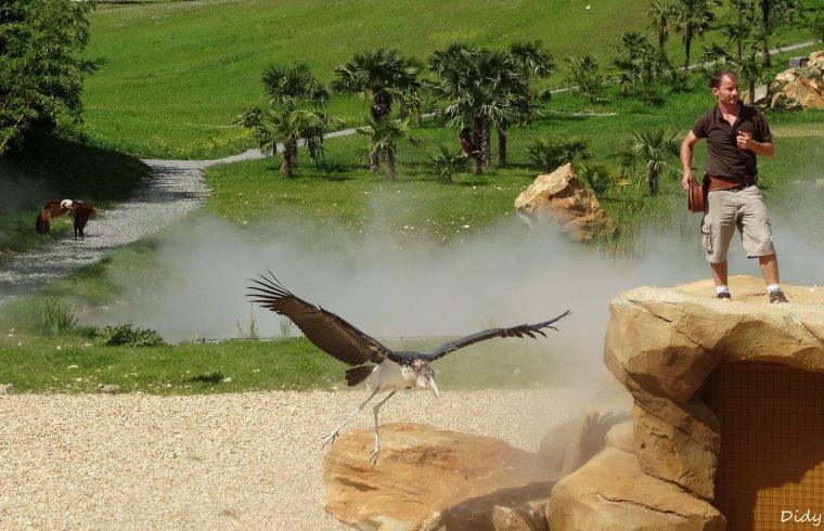 """nouveau spectacle d'oiseaux 2014 """"les maîtres des airs"""",le 21 Août suite 6"""