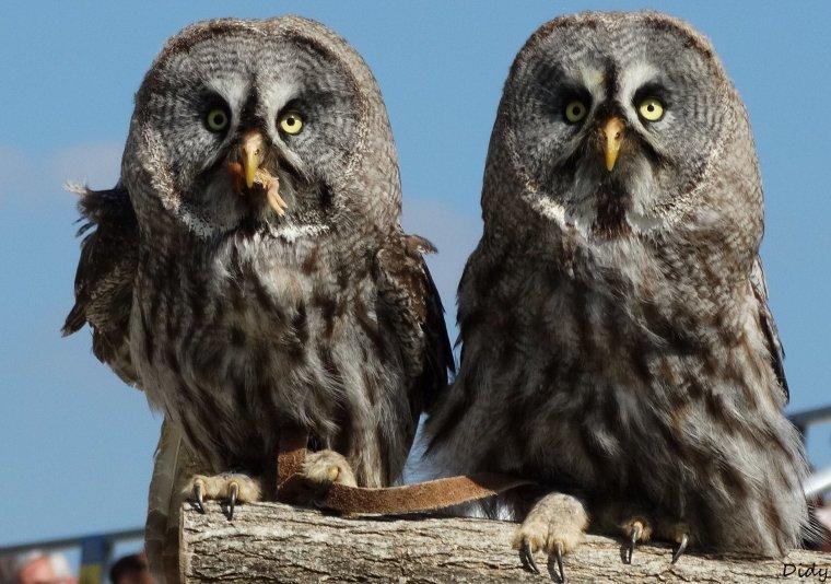 """nouveau spectacle d'oiseaux 2014 """"les maîtres des airs"""",le 7 septembre 2014"""