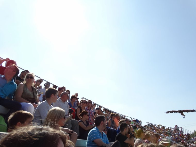 """nouveau spectacle d'oiseaux 2014 """"les maîtres des airs"""",le 7 septembre 2014 suite 2"""