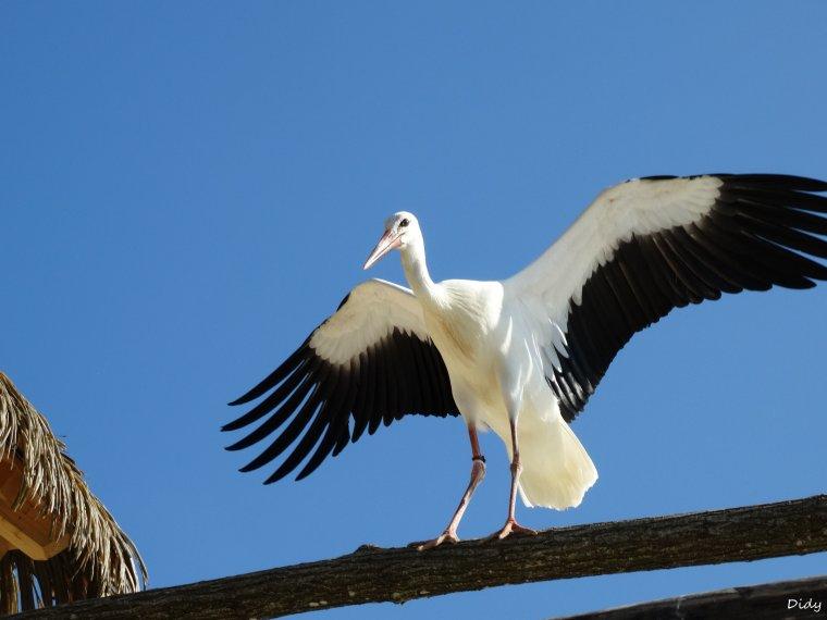 """nouveau spectacle d'oiseaux 2014 """"les maîtres des airs"""",le 7 septembre 2014 suite 5"""