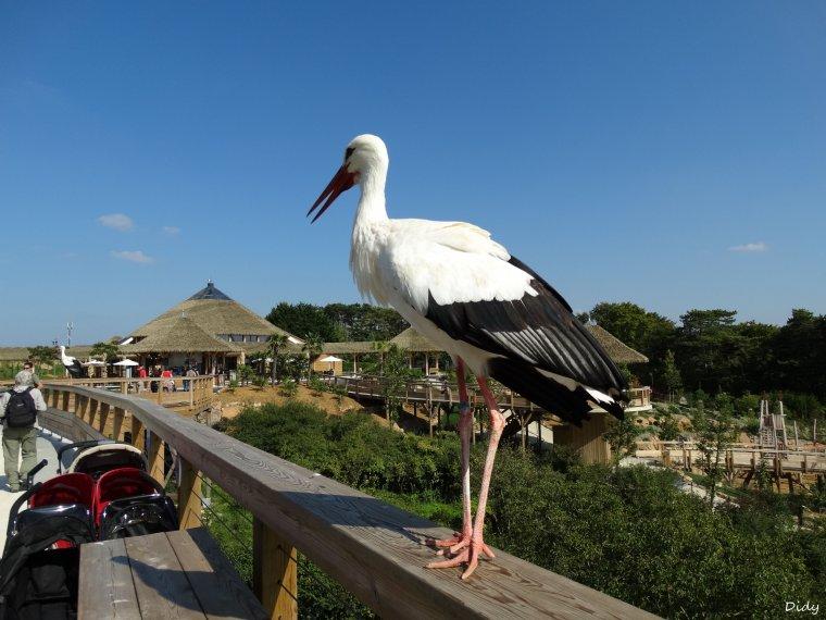 """nouveau spectacle d'oiseaux 2014 """"les maîtres des airs"""",le 7 septembre 2014 suite 6"""
