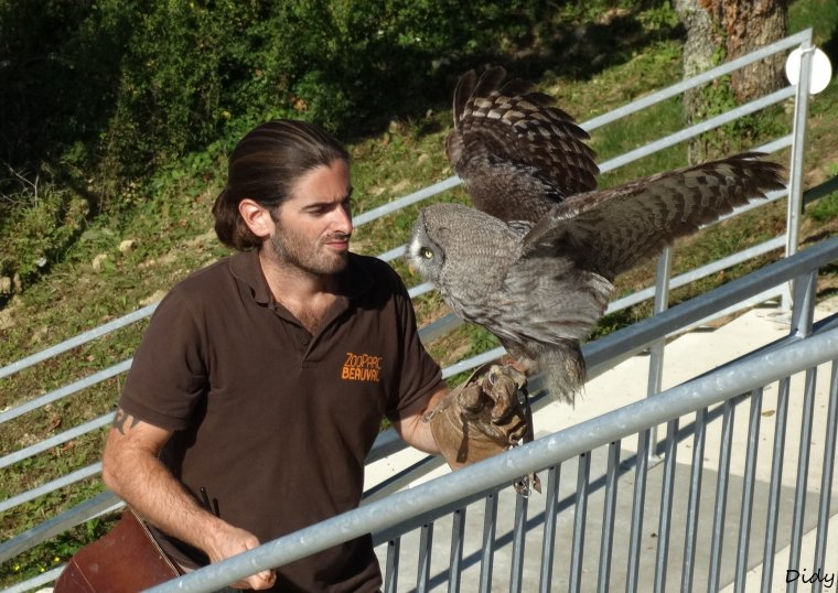"""nouveau spectacle d'oiseaux 2014 """"les maîtres des airs"""",le 26 septembre 2014"""