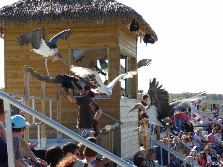 """nouveau spectacle d'oiseaux 2014 """"les maîtres des airs"""",le 26 septembre 2014 suite 6"""