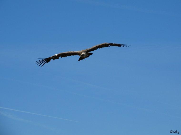 """nouveau spectacle d'oiseaux 2014 """"les maîtres des airs"""",le 26 septembre 2014 suite 7"""