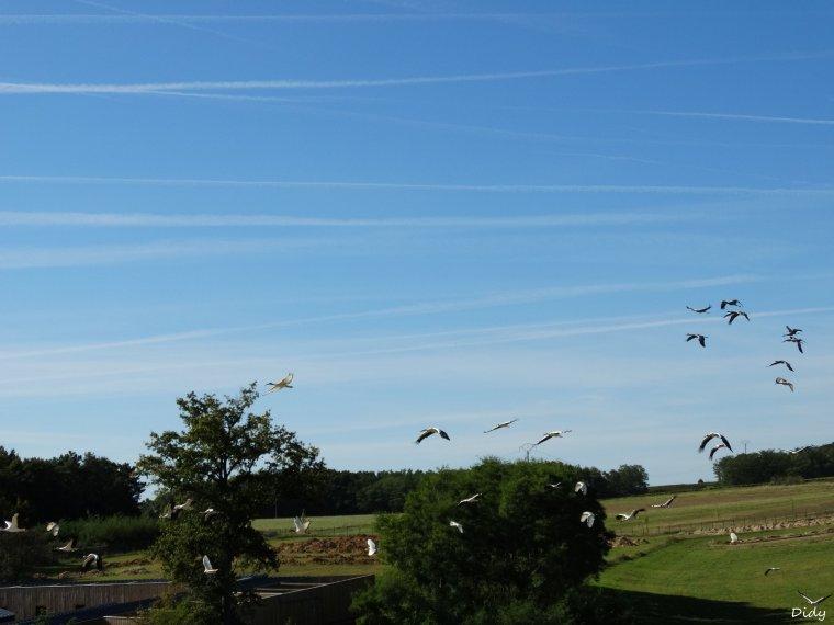 """nouveau spectacle d'oiseaux 2014 """"les maîtres des airs"""",le 26 septembre 2014 suite 9"""