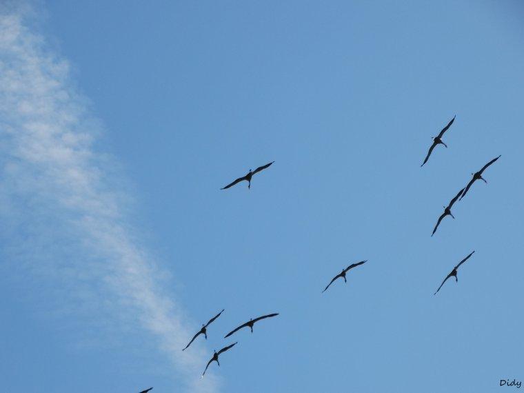 """nouveau spectacle d'oiseaux 2014 """"les maîtres des airs"""",le 26 septembre 2014 suite 11"""