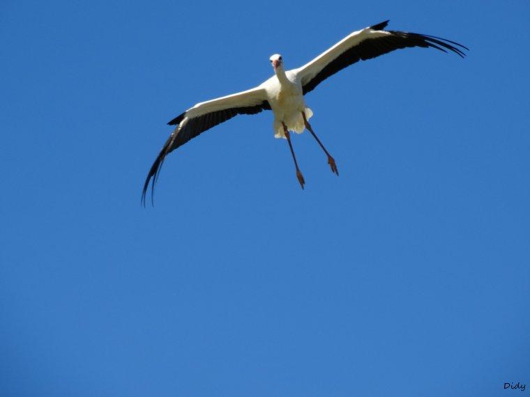 """nouveau spectacle d'oiseaux 2014 """"les maîtres des airs"""",le 26 septembre 2014 suite 12"""
