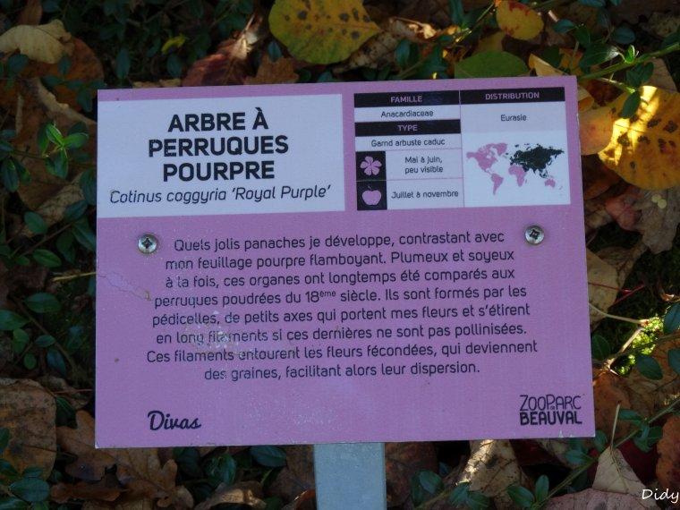 La flore des allées de Beauval - automne 2014 suite 13
