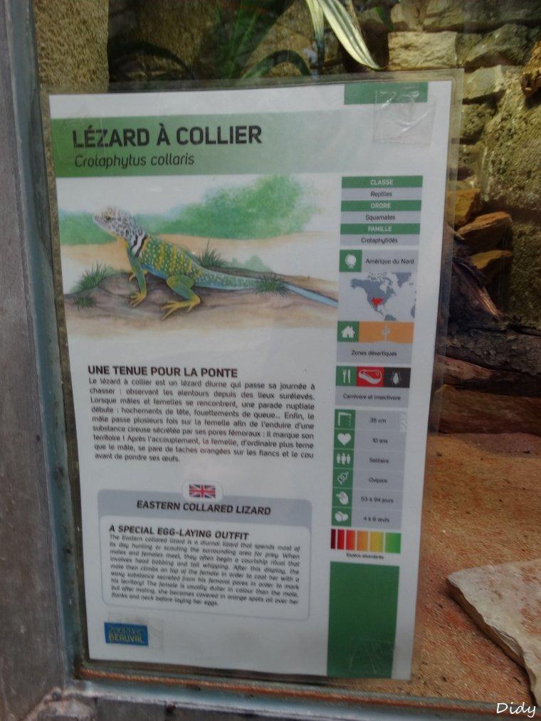 LEZARD A COLLIER