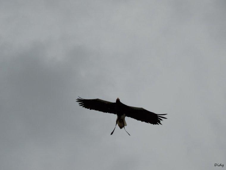 """nouveau spectacle d'oiseaux 2014 """"les maîtres des airs"""", le 10 Octobre 2014 suite 2"""