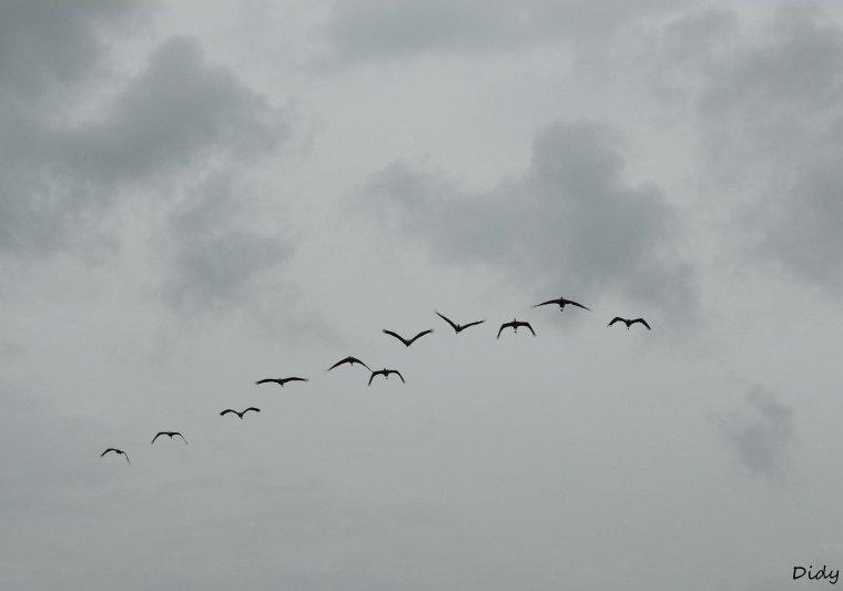 """nouveau spectacle d'oiseaux 2014 """"les maîtres des airs"""", le 10 Octobre 2014 suite 5"""