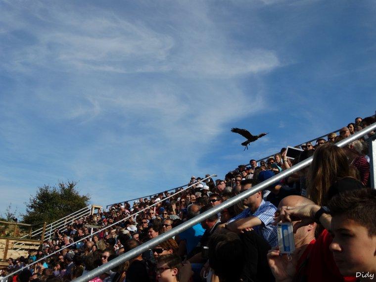 """nouveau spectacle d'oiseaux 2014 """"les maîtres des airs"""", le 19 Octobre 2014"""