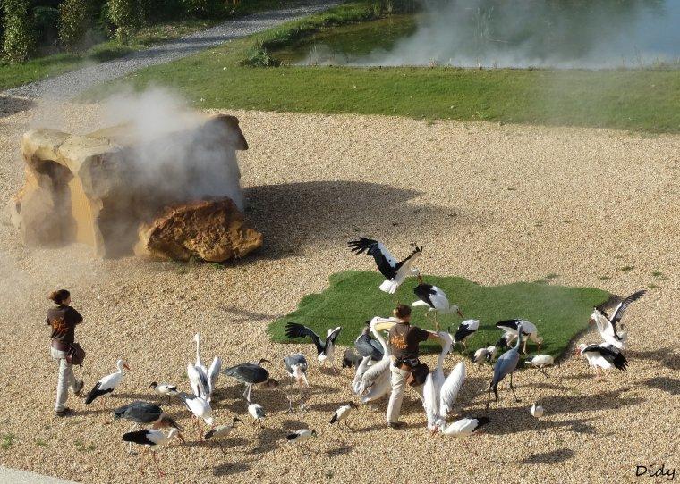 """nouveau spectacle d'oiseaux 2014 """"les maîtres des airs"""", le 19 Octobre 2014 suite 10"""