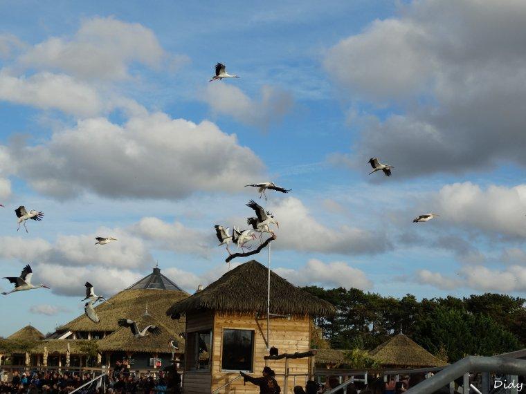 """nouveau spectacle d'oiseaux 2014 """"les maîtres des airs"""", le 10 Novembre 2014 suite 10"""