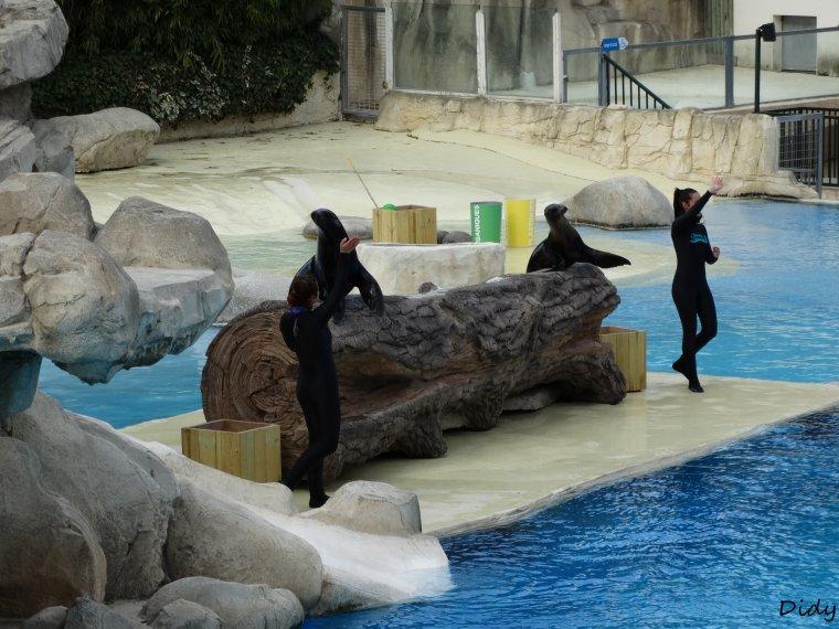 """spectacle du 28 Mars 2015  """"L'odyssée des lions de mer"""" suite 3"""