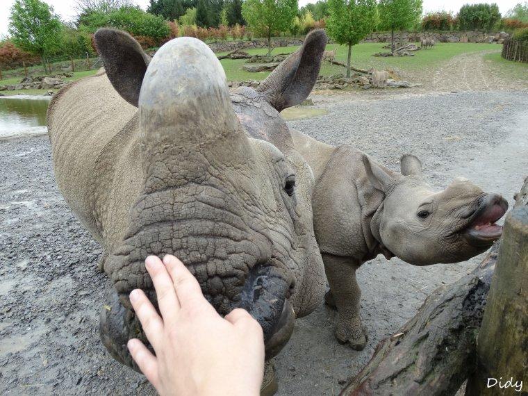 """art. n°7 - matinée du 03 Mai 2015 """"soigneur d'un jour"""" adulte formule été au ZooParc de Beauval"""