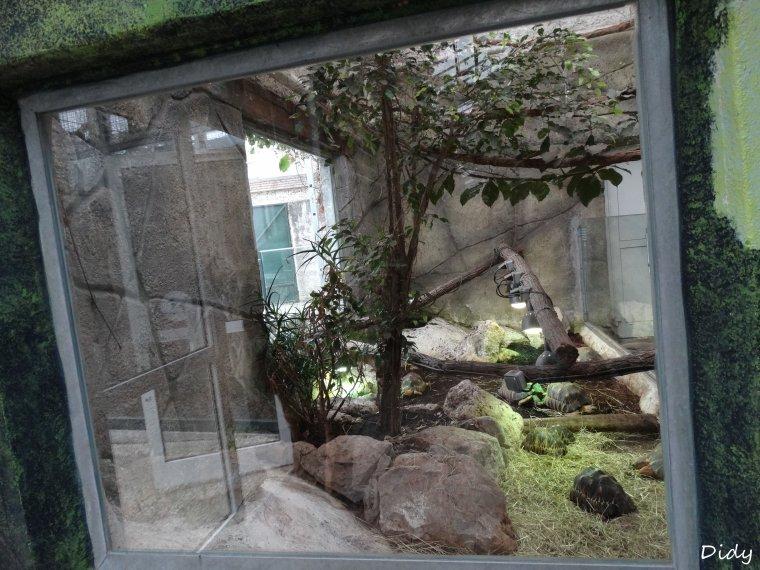 LES TORTUES du vivarium (radiée ou rayonnée, striée ou a éperons, géante d'Aldabra)