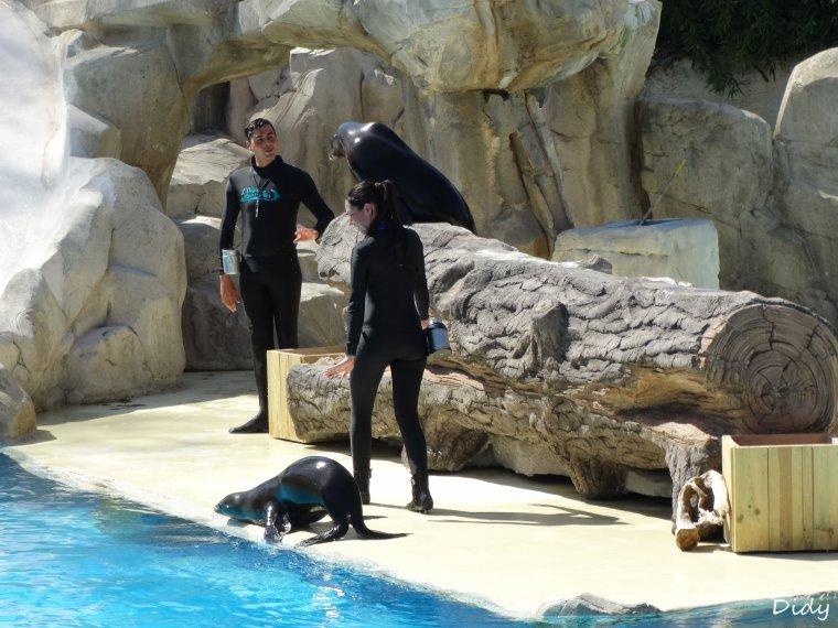"""spectacle du 09 Avril 2015 """"L'odyssée des lions de mer"""""""