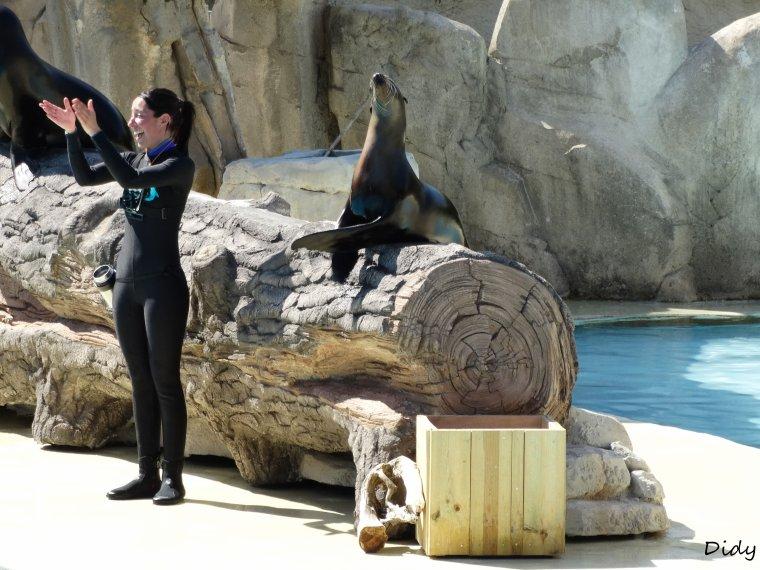 """spectacle du 09 Avril 2015 """"L'odyssée des lions de mer"""" suite 3"""