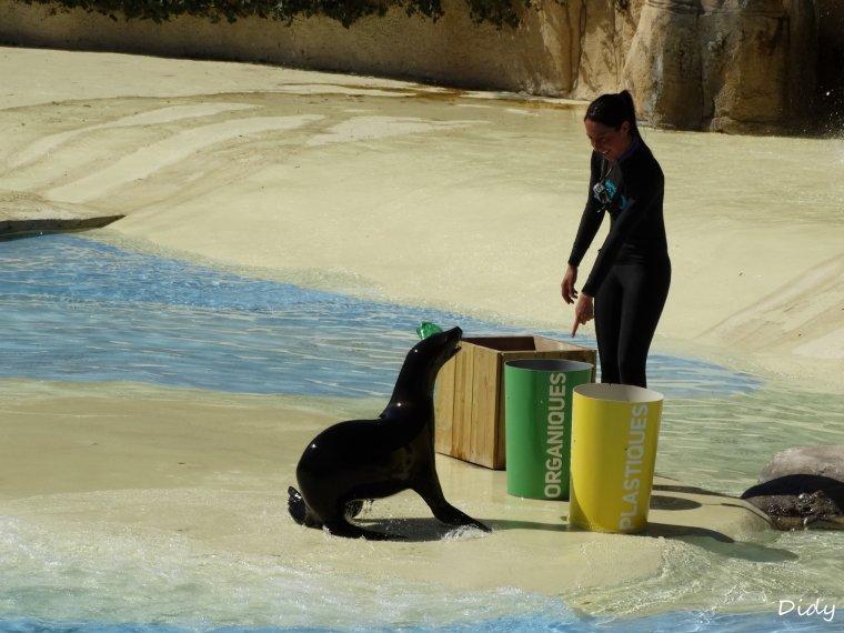 """spectacle du 09 Avril 2015 """"L'odyssée des lions de mer"""" suite 4"""