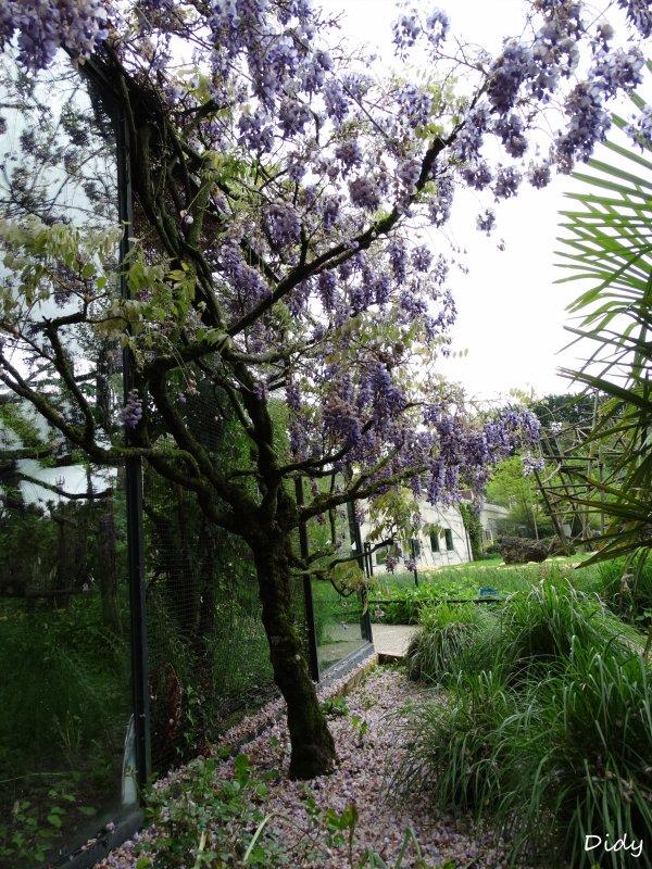 La flore des allées de Beauval - Printemps 2015 suite 21