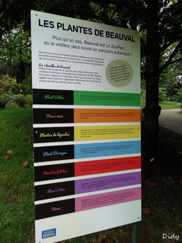 La flore des allées de Beauval - Printemps 2015 suite 22