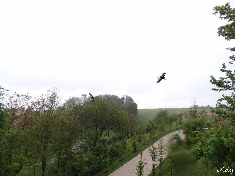 """spectacle du 03 Mai 2015 """"Les Maîtres des Airs"""" suite"""