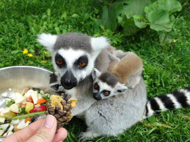 """""""Être soigneuse animalière d'un jour au Zooparc de Beauval"""""""