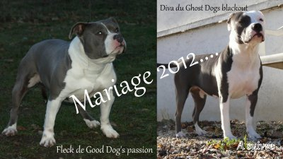 On l'annonce !!!! Mariage 2012