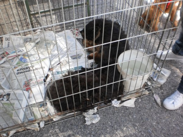 maltraitance envers les animaux!