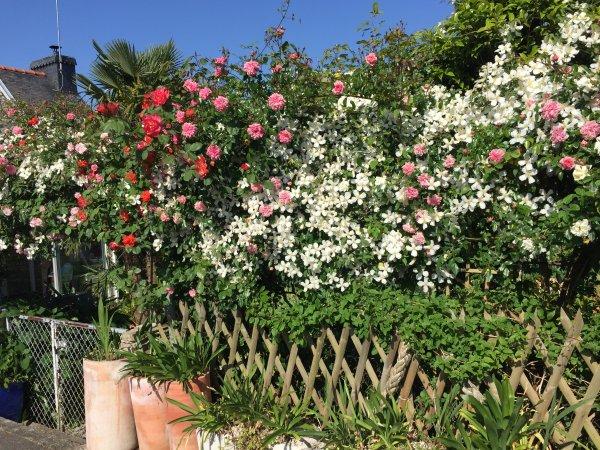 fleurs du moment