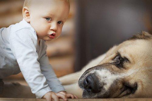 « Un animal de compagnie est aussi un membre d'une famille. ♥ » - CitationsFamiliales -
