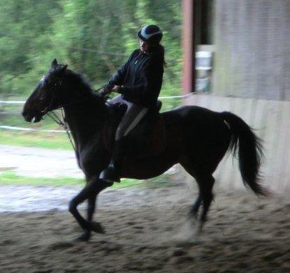 Mistral <3 Plus Qu'un simple cheval <3