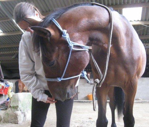 Monter a cheval donne un avant gout de la liberté parfaite <3