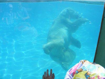wini l'ourson qui nage