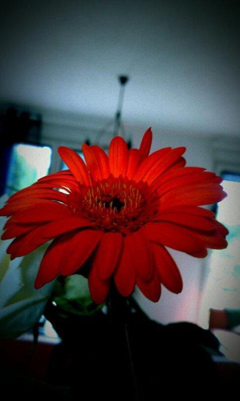 Fleur Photo n°3