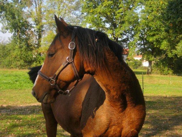 Le cheval idéal n'est pas le cheval parfait. C'est juste celui dont on aime tout, même ses défauts.