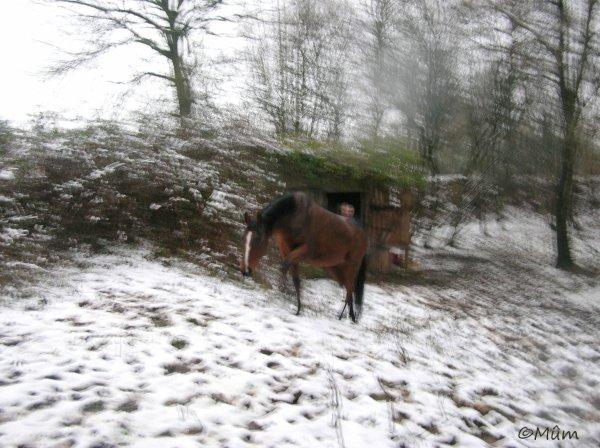 Qui mieux que mon cheval hennissant en me voyant, me donne le courage , qui me manque parfois , pour affronter la vie ?