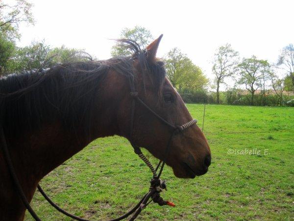 « Pour parler à un cheval, il n'y a pas besoin de mots. C'est une étreinte charnelle qui alimente nos rêves. »