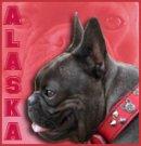 Photo de Alaska38080
