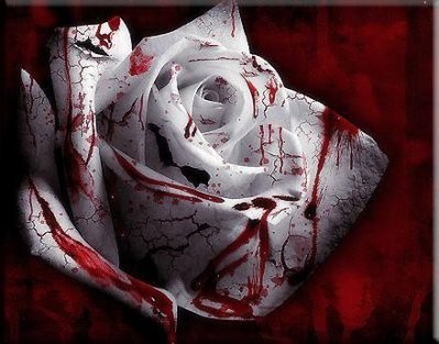Je ne mettrai pas aujourd'hui le feu au champs de roses à l'âpre rouge